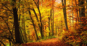 Autumn forest with warm colors Stock Photography