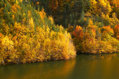 Autumn forest and water Stock Photography