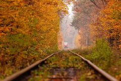 Autumn forest among which goes a strange tram Stock Photography