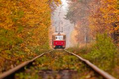 Autumn forest among which goes a strange tram Stock Image