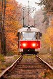 Autumn forest among which goes a strange tram Stock Images