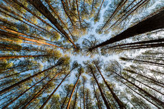 Autumn forest wide angle shot Royalty Free Stock Image
