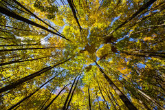 Autumn Forest Wide angle Stock Image