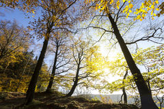 Autumn Forest Wide Angle View. With Sun royalty free stock photos