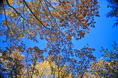 Autumn forest, Wisconsin Stock Photo