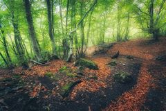 Free Autumn Forest With Trail In Fog. Dreamy Landscape Royalty Free Stock Photos - 126410258