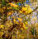 Autumn in the forest. Royalty Free Stock Photos