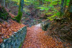Autumn forest with wood bridge over creek in beeches forest, Italy. Autumn forest with wood bridge over creek in beeches forest with trees and colorful foliage Stock Photography