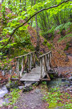 Autumn forest with wood bridge over creek Royalty Free Stock Photo