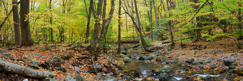 Autumn forest wood bridge panorama over creek Stock Photography