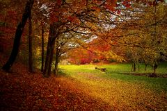 Autumn, Forest, Woods, Nature, Fall Royalty Free Stock Images