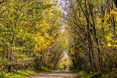 Forest in autumn with yellow and green leaves Royalty Free Stock Image