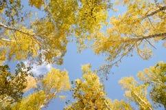 Autumn forest background Stock Photo