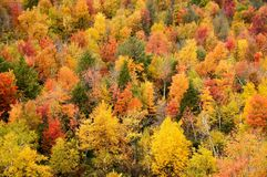 Autumn forest. Autumn forest with yellow, green, red and orange trees - top view Royalty Free Stock Photography