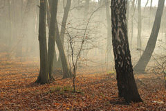 Autumn in forest Royalty Free Stock Image