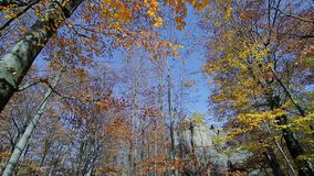 Autumn forest. Yellowed leaves on the trees. View the camera in the top and move forward. Rocks of stone in the forest stock footage