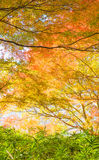 Autumn Forest in Yoshino, Nara, Japan Stockfoto