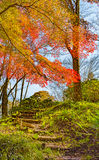 Autumn Forest in Yoshino, Nara, Japan Stockfotografie