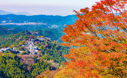 Autumn Forest in Yoshino, Nara, Japan Lizenzfreies Stockbild