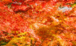 Autumn Forest in Yoshino, Nara, Japan Lizenzfreie Stockbilder