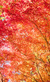 Autumn Forest in Yoshino, Nara, Japan Stockbilder