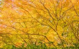 Autumn Forest in Yoshino, Nara, Japan Royalty Free Stock Photo