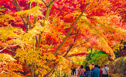 Autumn Forest in Yoshino, Nara, Japan Stock Photography