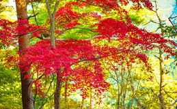 Autumn Forest in Yoshino, Nara, Japan Royalty Free Stock Photography