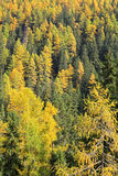Autumn forest at Ziarska dolina - valley in High Tatras, Slovaki Royalty Free Stock Photos