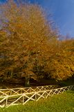Autumn in the Foresta Umbra, Gargano, Apulia, Italy. The autumn season in the Umbra Forest, Gargano, Apulia, Italy stock photos