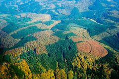 Autumn Forestry Pattern - a Europa Central foto de stock