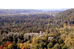 Autumn forests. Forests on a national park Sigulda Stock Images
