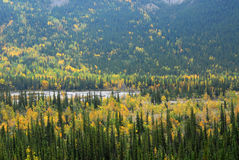 Autumn forests. Colorful view of  autumn pine and aspen forests in river valley, kananaskis country, alberta, canada Royalty Free Stock Images