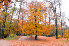 Autumn in the forests in Netherlands Royalty Free Stock Photo