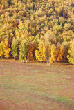 Autumn forests in prairie Stock Images