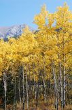 Autumn forests in rockies. Autumn forests in sheep river valley provincial park, alberta, canada Stock Images