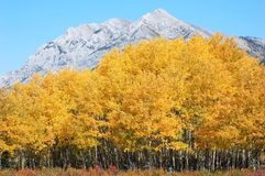 Autumn forests in rockies. Autumn forests in sheep river valley provincial park, alberta, canada Royalty Free Stock Photography