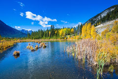 The autumn forests. Shallow Lake Vermilion among the autumn forests. Sunny day in the Canadian Rockies Royalty Free Stock Images