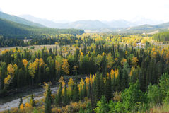 Autumn forests in valley. Colorful autumn view of  forests in river valley, kananaskis country, alberta, canada Stock Image