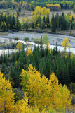 Autumn forests in valley. Colorful autumn view of  forests in river valley, kananaskis country, alberta, canada Stock Photo