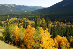 Autumn forests in valley Stock Image