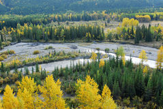 Autumn forests in valley. Colorful autumn view of  forests in river valley, kananaskis country, alberta, canada Royalty Free Stock Images