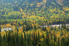 Autumn forests in valley. Colorful autumn view of  forests in river valley, kananaskis country, alberta, canada Stock Photos