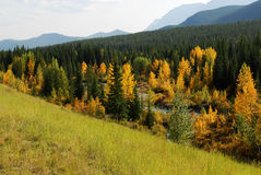 Autumn forests in valley. Colorful autumn view of  forests in river valley, kananaskis country, alberta, canada Royalty Free Stock Image