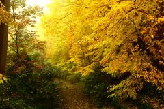 Autumn Forrest stock images