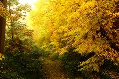 Autumn Forrest. Illuminating fall forrest in Bucks County Pennsylvania Stock Images