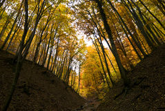 Autumn forrest Royalty Free Stock Image