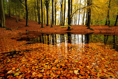 Autumn forrest. A lake in the forrest Stock Photography