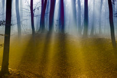 Autumn in a Forrest Royalty Free Stock Photography
