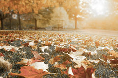 Autumn in a Forrest Royalty Free Stock Photos